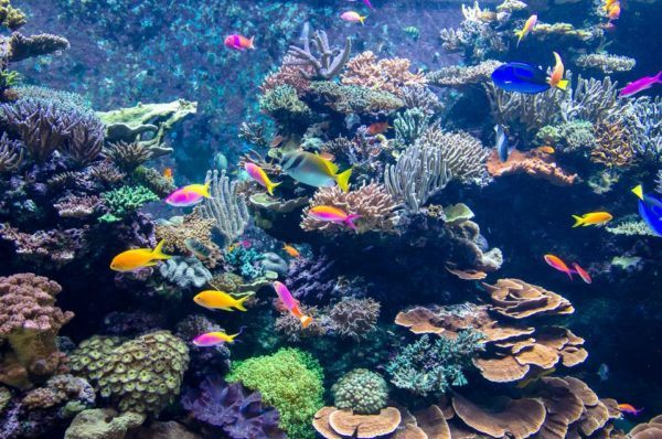 Funciones del coral