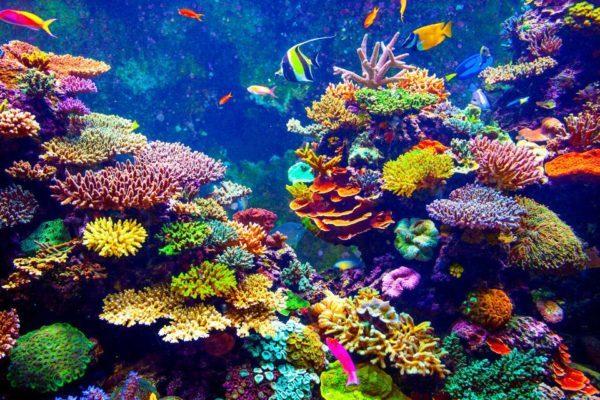 Qué es el coral