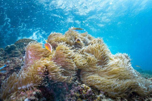 Las picaduras de los animales marinos anemona