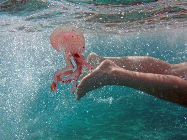 Las picaduras de los animales marinos