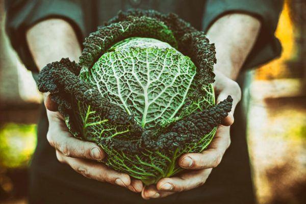 Cualidades de las verduras de hojas verdes