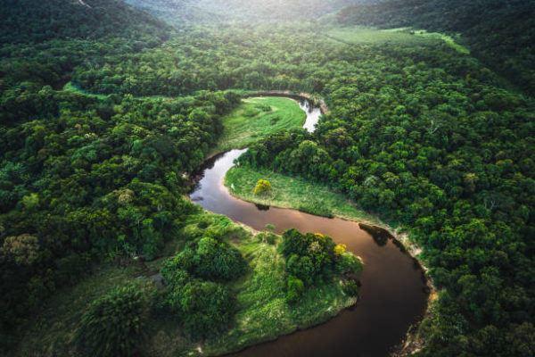 Consecuencias globales de los incendios del amazonas