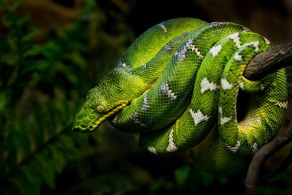 Fauna amazonas reptiles