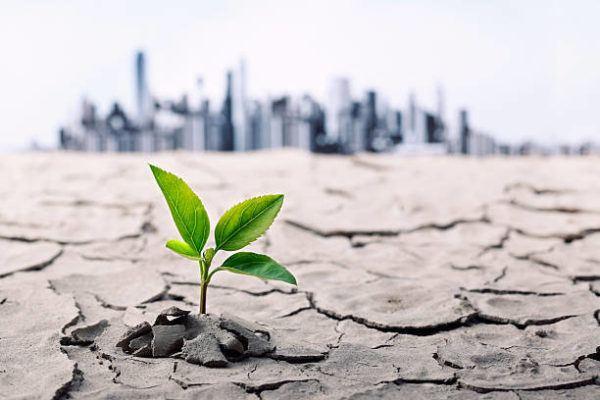 Las consecuencias cambio climatico s