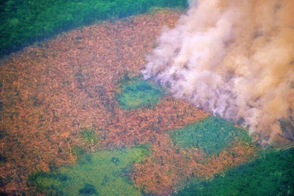 Las consecuencias globales de los incendios del amazonas