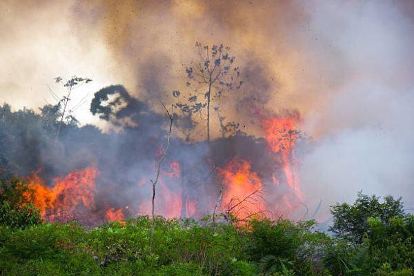 Las consecuencias globales incendios del amazonas