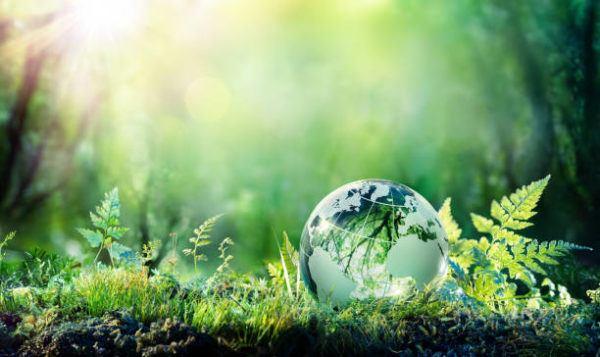 Cual es la relacion entre ecologia el medio ambiente
