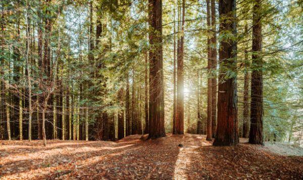 Las ventajas usos de la silvicultura sostenible