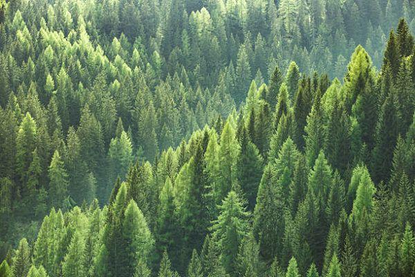 Las ventajas usos de silvicultura sostenible