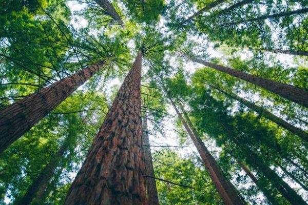 Las ventajas usos la silvicultura sostenible