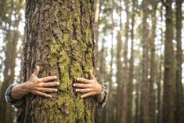 Razones bosques son importantes abrazo arbol