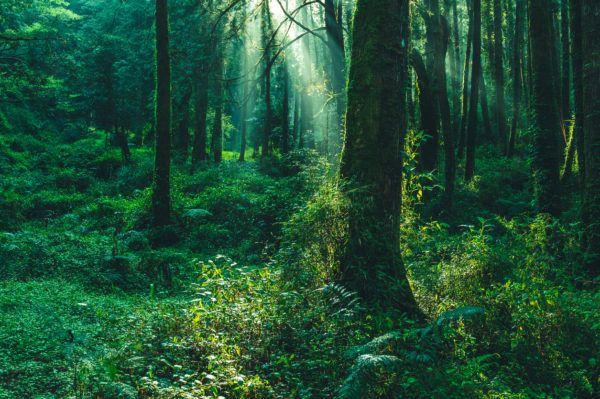 Razones bosques son importantes amanecer