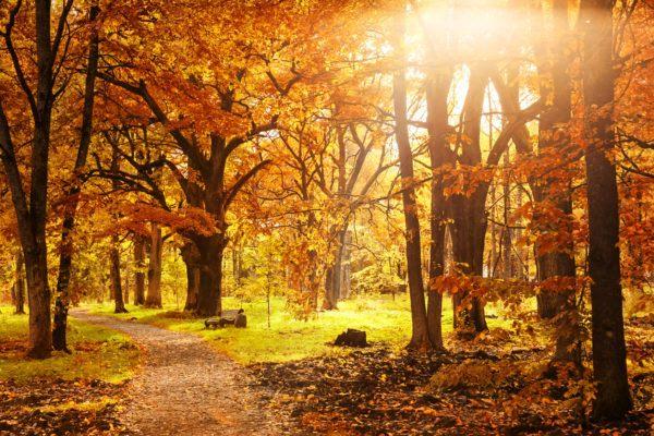 Razones bosques son importantes bosque otoño