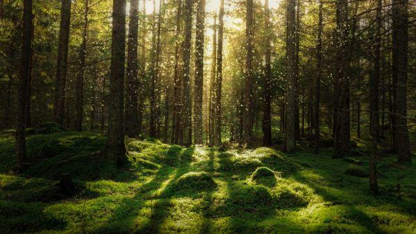 Razones bosques son importantes iluminacion