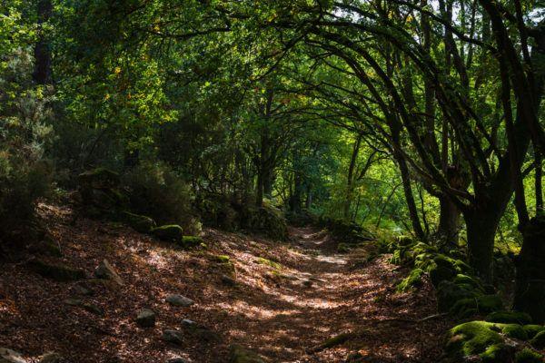 Razones bosques son importantes