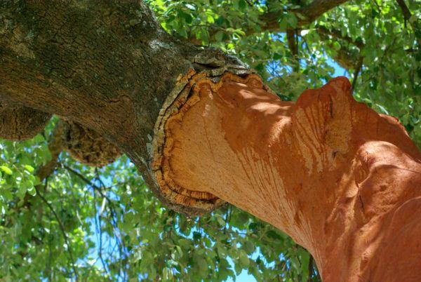 Razones bosques son importantes madera