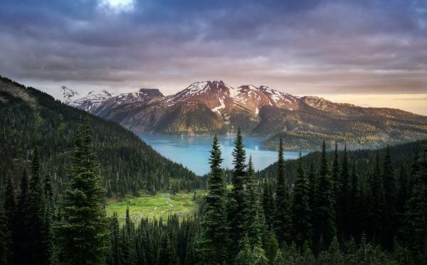 Razones bosques son importantes paisaje