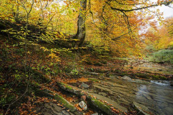 Razones bosques son importantes rio