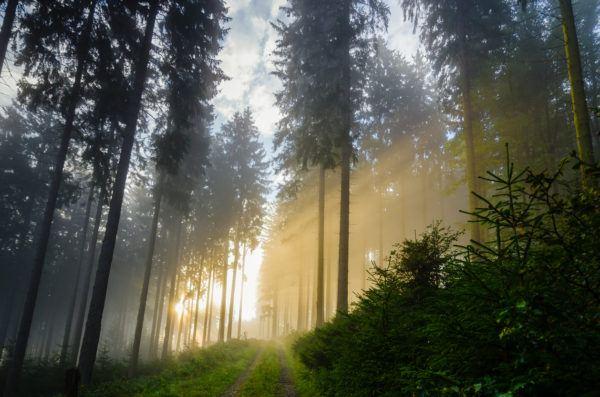 Razones bosques son importantes sol