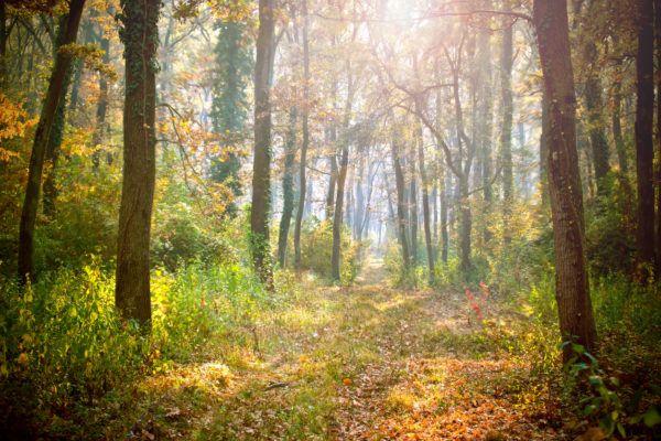 Razones bosques son importantes suelo