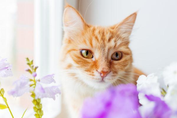 Alergia gatos sintomas pronostico tratamiento