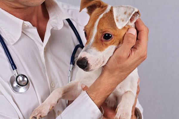 Alergias de perros