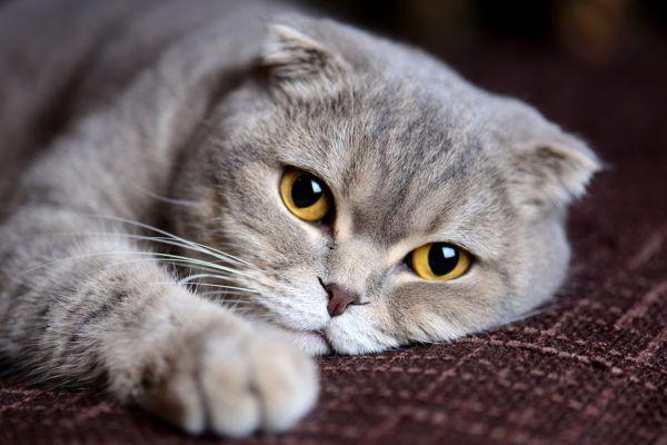 Alergias gatos