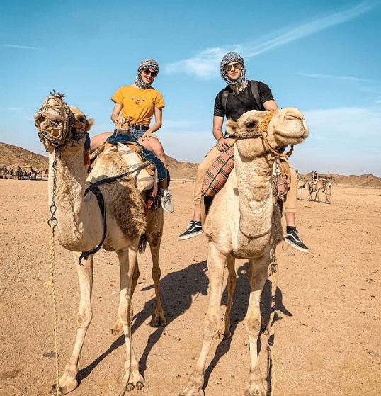 Animales que solo existen en el Desierto camello