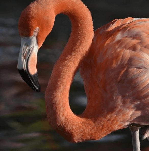 Animales que solo existen en el Desierto Flamenco