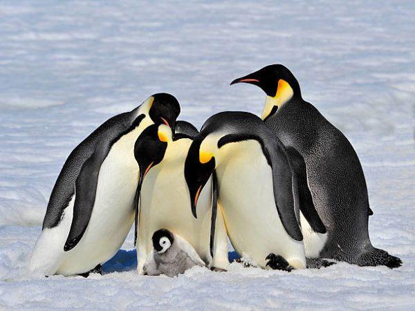 Animales que viven en la antartida
