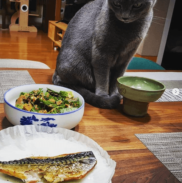 Beneficios y recetas de comidas caseras para gatos pescado