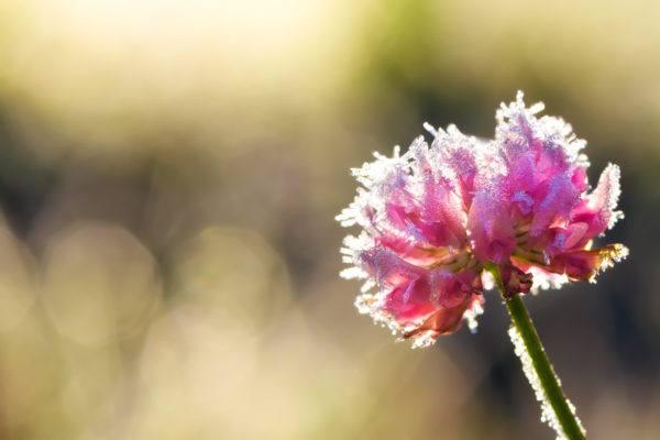 Como cuidar plantas casa para que no mueran por heladas flor