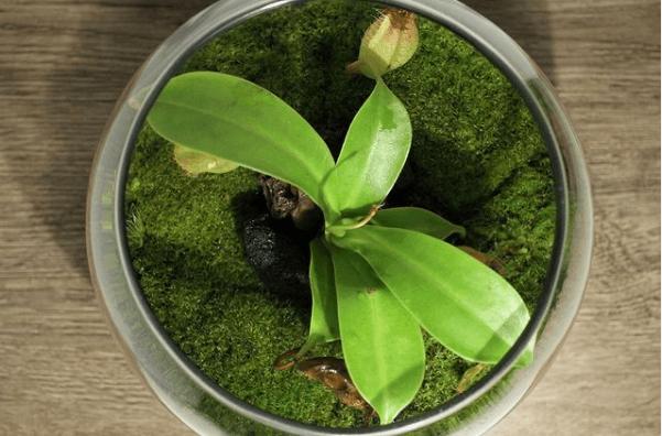 ¿Cómo hacer un terrario paso a paso? Tipos de plantas