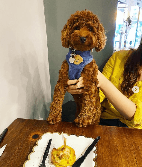 ¿Cuáles son los beneficios de la comida casera para perros? Éstas son algunas recetas de comida casera para perros cumpleaños