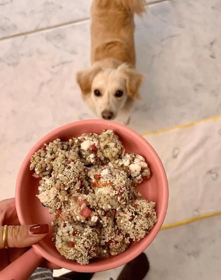 ¿Cuáles son los beneficios de la comida casera para perros? Éstas son algunas recetas de comida casera para perros veterinario
