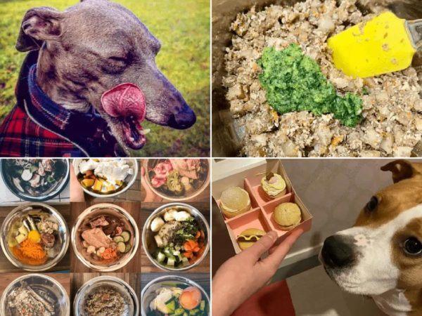 ¿Cuáles son los beneficios de la comida casera para perros? Éstas son algunas recetas de comida casera para perros portada