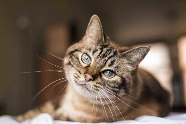 Dia internacional gato cuando es cuales son las mejores formas celebrarlo
