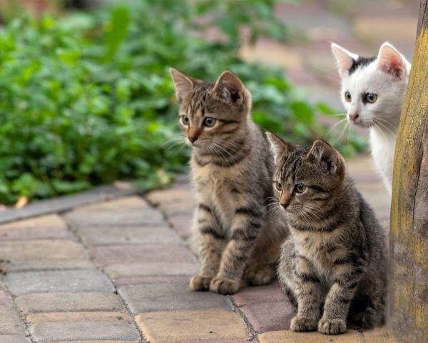 Dia internacional gato cuando es porque se celebra celebrarlo