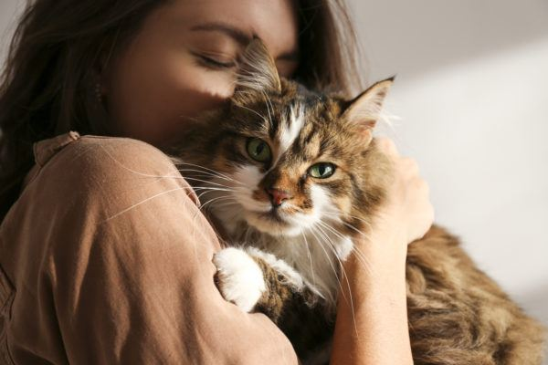 Dia internacional gato cuando es porque se celebra cuales son mejores formas celebrarlo