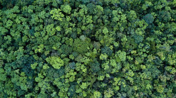 Cuando es el dia internacional de los bosques