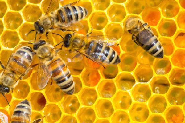 Dia mundial de las abejas cuando es el origen cual es su importancia 1