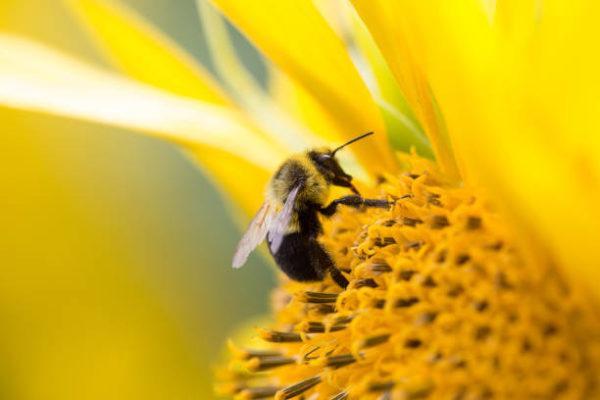 Dia mundial de las abejas cuando es el origen cual es su importancia 2