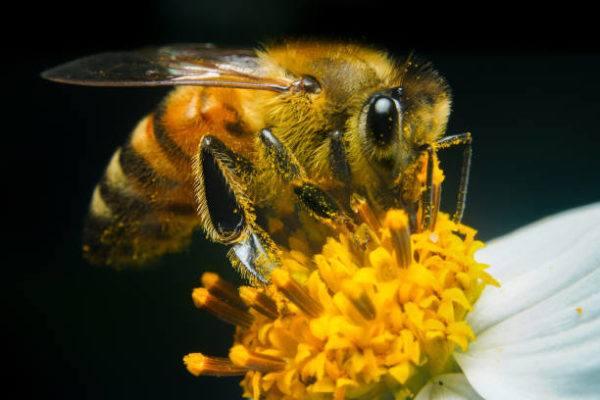 Dia mundial de las abejas cuando es el origen cual es su importancia 3