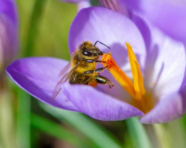 Dia mundial de las abejas cuando es el origen cual es su importancia 4