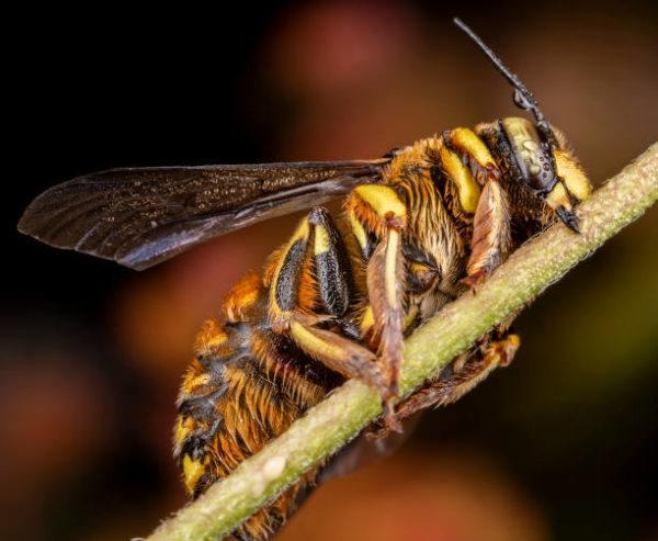 Dia mundial de las abejas cuando es el origen cual es su importancia 5