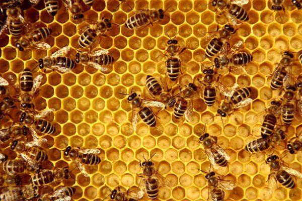 Dia mundial de las abejas cuando es el origen cual es su importancia 6