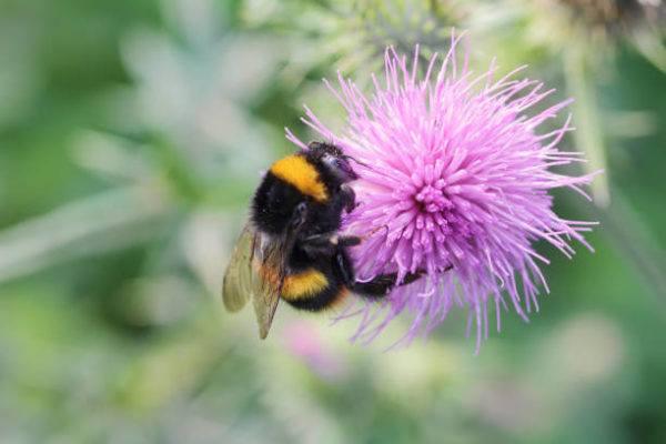 Dia mundial de las abejas cuando es el origen cual es su importancia 7
