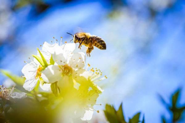 Dia mundial de las abejas cuando es el origen cual es su importancia 9