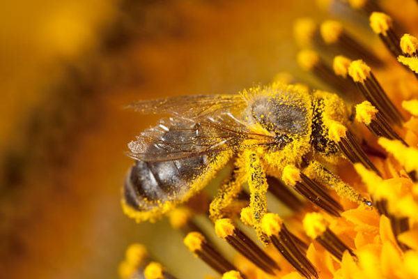 Dia mundial de las abejas cuando es el origen cual es su importancia