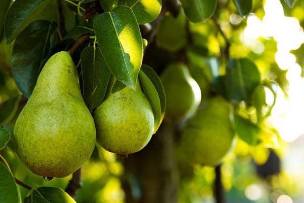 Que frutas y verduras comer en febrero calendario de temporada pera
